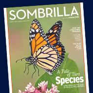 Sombrilla Spring 2016